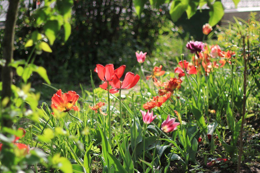 Flowers Curba